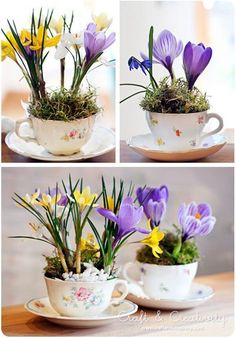 **need to find some artificial crocus. DeR **Indoor garden - plant small bulbs (like crocus) in a cup and saucer to force for indoor blooming. Garden Plants, Indoor Plants, House Plants, Cup Crafts, Easter Crafts, Beautiful Gardens, Beautiful Flowers, House Beautiful, Beautiful Boys