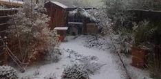 Image result for winter garden