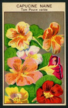 Antique French Seed Pack Label 1920s Flower Botanical Capucine Naine 29 | eBay