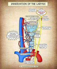 Nursing Mnemonics, Icu Nursing, Nursing Notes, Funny Nursing, Anatomy Humor, Medical Anatomy, Anatomy Flashcards, Medicine Humor, Nurse Life
