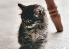 Fluffy kittens are the cutest things alive <3