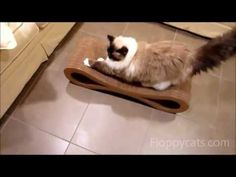 Whenever I need cheering up, I turn on a Floppycat video.  Charlie and Trigg :)  Ragdoll Cats Receive Karma Products Infinity Cat Scratcher - ねこ - ラグドール -- Floppycats  http://www.youtube.com/watch?v=P208dHt16kI