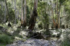 File:Australian bush.jpg