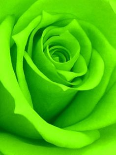 Animated Roses | Name : Animated Rose 02.gif