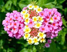 Rastliny, ktoré nevyžadujú v záhrade veľa starostlivosti