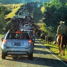 Traffic jam in Montana. Taken in Red Lodge by commuter trying to get to work
