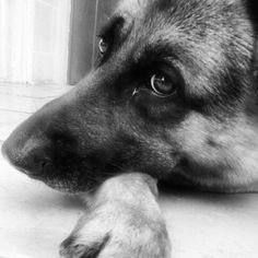 My dog -Aron-