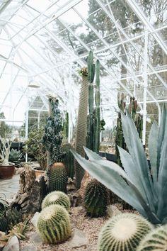 Cactus garden in a greenhouse The Secret Garden, Greenhouse Plans, Greenhouse House, Plants Are Friends, Cactus Y Suculentas, Green Life, Cacti And Succulents, Cactus Planters, Dream Garden