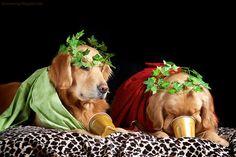doggies et tu brutie and friend lol