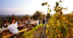 """Imagine yourself in one of the cozy wine taverns called """"Heuriger,"""" and relish a bottle of wine and some regional specialities © WienTourismus/ Peter Rigaud Visit Austria, Austria Travel, Travel Europe, Vienna Restaurant, Portugal, Sonoma Valley, Napa Sonoma, Picnic Area, Travel Information"""