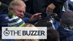 Huge Bird Lands On Fan's Head At Seattle Seahawks Game - Taima, the Seahawks' mascot.