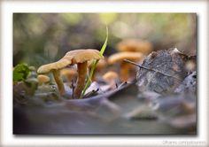 Mushroom | Fotografia de Paulo Loureiro | Olhares.com