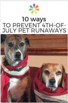 Ways to Prevent Pet Runaways Keep your pets safe and away from the fireworks.on the Fourth of July. Diy Dog Crate, Healthy Pets, Healthy Recipes, Dog Anxiety, Pet Safe, Old Dogs, Happy Animals, Losing A Pet, Pet Health