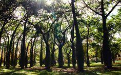 Parque Turia (Valencia)