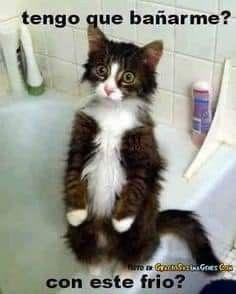 Pin De Claudia En Humor Memes De Frio Memes De Gatos Divertidos Imagenes De Animales Graciosas