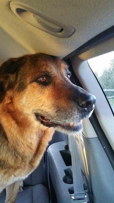Found Dog - Mix - Campbellcroft, ON, Canada L0A 1B0 on November 09, 2015 (16:00 PM)
