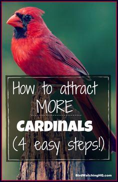 4 Simple Strategies To Attract Cardinals To Your Feeders! - 4 Simple Strategies To Attract Cardinals To Your Feeders! Bird Feeder Craft, Bird House Feeder, Homemade Bird Houses, Homemade Bird Feeders, Bird Barn, Barn Owls, Backyard Birds, Garden Birds, Backyard Chickens