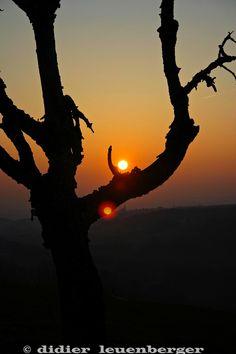 Leçon du soleil - TOUSDESANGES