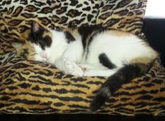 Dondi Cat | Pawshake