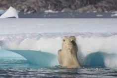 Eine Grönland Expedition
