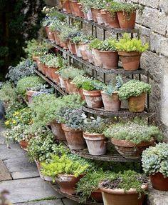 Small Backyard Gardens, Garden Spaces, Small Gardens, Backyard Landscaping, Garden Pots, Outdoor Gardens, Cottage Garden Design, Small Garden Design, Container Plants