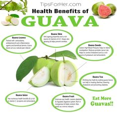 Today we are going to go over some of the many healthy benefits of consuming guavas, and why you should incorporate them into your diet. Guava trees are best grown in warm climates and can be found… Guava Benefits, Health Benefits, Diy Beauty, Beauty Hacks, Beauty Tips, Guava Fruit, Guava Leaves, Guava Tree, Sources Of Vitamin A
