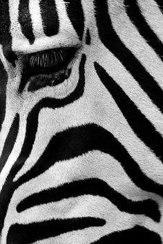 5d67d697b41 Am i white w  black stripes