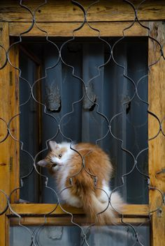 "theperfectworldwelcome:  "" raccaryusui:  "" raindropsonroses-65:  "" Cat in a Window (by stalkERR)  ""  (*^_^*)  ""  Beautiful!!! \O/  """