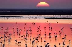 Camargue, France - Flamingos at sunset in the Parc Naturel Régional de Camargue