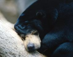 Does your toddler or preschooler sometimes look like a hibernating bear when she takes a nap? Many animals hibernate for part of the year, which can seem cute to a young child. Since children love the idea of hibernating squirrels, bears and bunnies, use this topic to teach your little one about science in a sweet and interactive way. Put together activities to teach your child about hibernating animals, like making crafts, singing songs and playing.