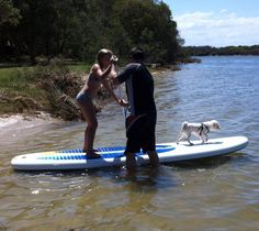 #HappyTails - thank you so much to the Quinn family for sending us this beautiful picture of ex-RSPCA guest, Scoobie! Check out this little go-getter, adopted in February last year. We hear from his 'mum' that he is adored by the family, and really enjoys paddle boarding with his human sister and 'dad'! Looks like rescue pets are the best :) ♥ happy tails!