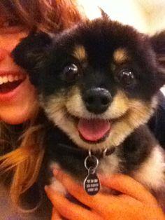 #happy #puppy