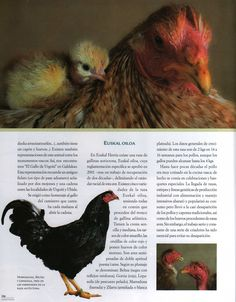 Euskal Oiloa Chicken - Google Search