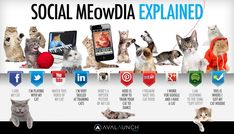 Social Media Explained by cute cats Infographic