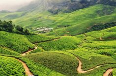 The state of Assam is the largest tea-growing region in the World and produces the world-famous Assam tea. Hiking up the hills of Assam offers stunning views of the Himalayas and the chance to see where Darjeeling tea is also grown.