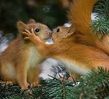 « Baby Squirrel Kiss » par Sergey Bezberdy