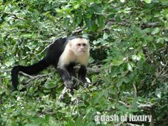 Palo Verde National Park Costa Rica – The REAL Jungle Cruise | A Dash Of Luxury
