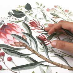 Botanical watercolour, working on a new range for 🐜 . Protea Art, Protea Flower, Flower Bird, Floral Illustrations, Botanical Illustration, Watercolour Painting, Floral Watercolor, Australian Flowers, Lion Art
