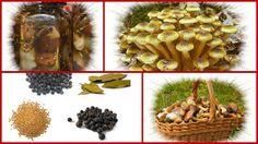 Vorratshaltung: Pilze im Gewürzesud