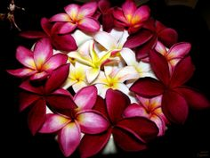 Plumeria bouquet. Would be pretty for a wedding
