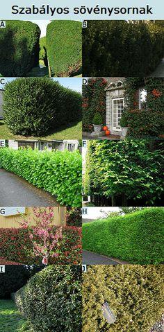 szabályos sövénynek nevelhető növények Porch Garden, Gardening Tips, Stepping Stones, Bali, Garden Design, Outdoor Structures, Landscape, Outdoor Decor, Flowers