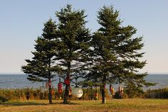 Carolyn M. Shaw of Middleton, N.S. photographed these unique trees that delight and comfort Nova Scotia's coastal communities. The buoy trees, scattered throughout the province, each have their own personality and remind the local people of the unwavering role of the ocean in their lives.