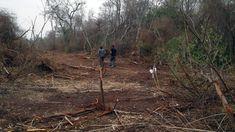 Desmontes en el norte provincial generan cruces entre el gobierno y originarios: Los pobladores denuncian la tala ilegal en Saucelito,…