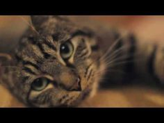 @Kirsten Wehrenberg-Klee Scheffelmaier  Reminded me of Murph lol Things We Can Learn From Cats