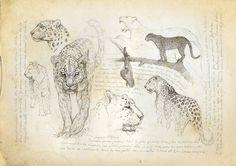 Big Cats I Marcello Pettineo