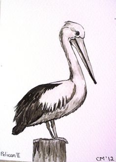 how to draw a cartoon pelican