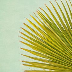 F is for frond. by LoveMissB, via Flickr