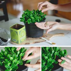 How To Copy, Paste & Multiply Your Succulent Plants