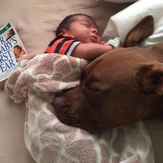 Would you trust your baby next to a Pit Bull? Hell, yeah!!