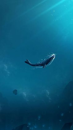 minimal wallpaper of whale. Whats Wallpaper, Galaxy Wallpaper, Cool Wallpaper, Wallpaper Backgrounds, Beautiful Wallpaper, Amazing Backgrounds, Iphone Backgrounds, Screen Wallpaper, Iphone Wallpapers